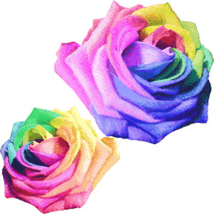 Rainbow rose clipart 20 free Cliparts | Download images on ...