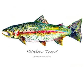 Rainbow trout fish.