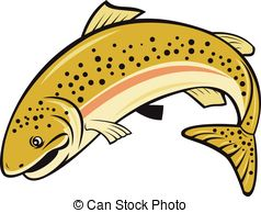 Drawing of Rainbow trout jumping.