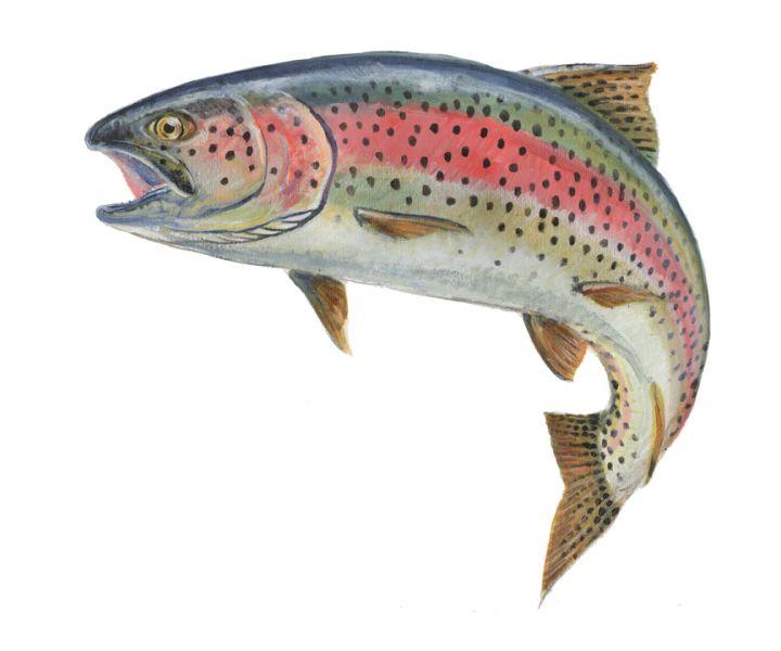 Spot illustrationClient: U.S. Fish and Wildlife National Fish.