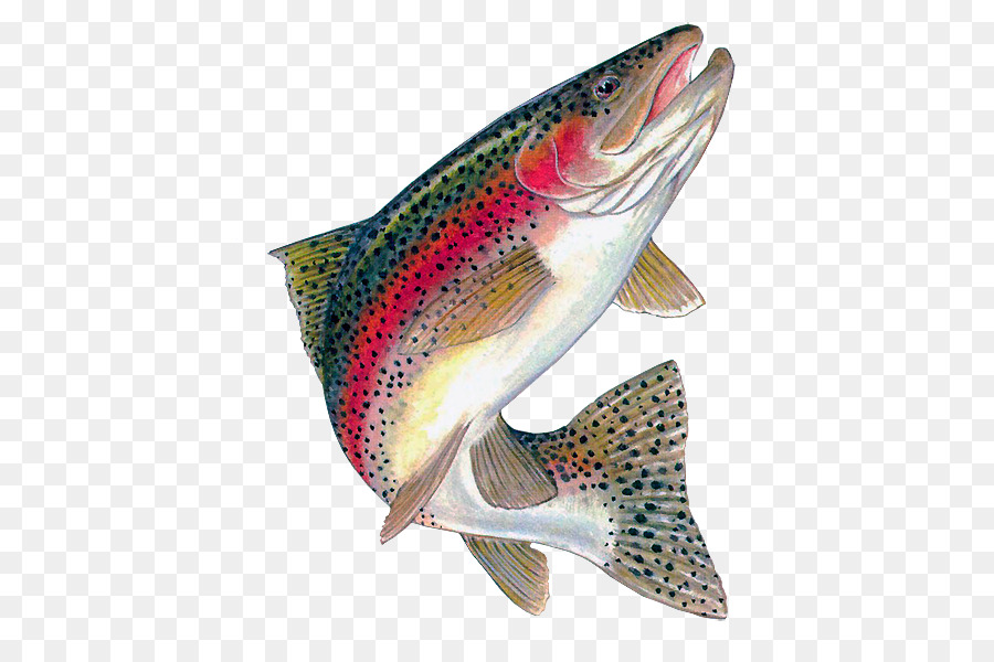 Rainbow Trout Brown Trout Freshwater Fis #54605.