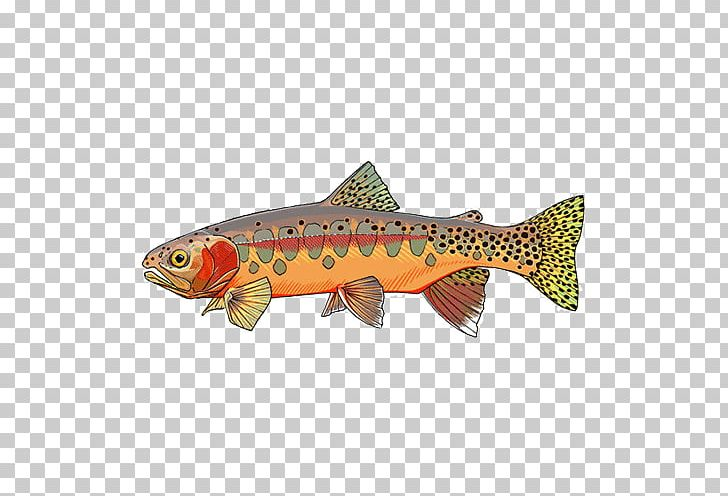 Decal Brook Trout Sticker Rainbow Trout PNG, Clipart.