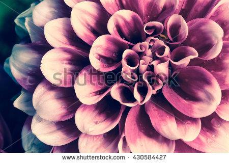 Flower Rain Stock Photos, Royalty.