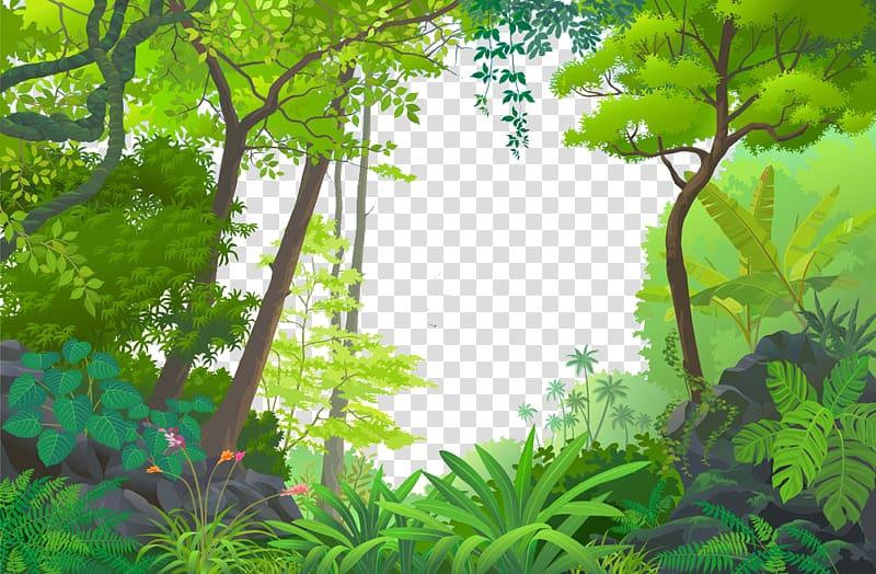 Jungle Euclidean Tropical rainforest, Cartoon Forest, forest.