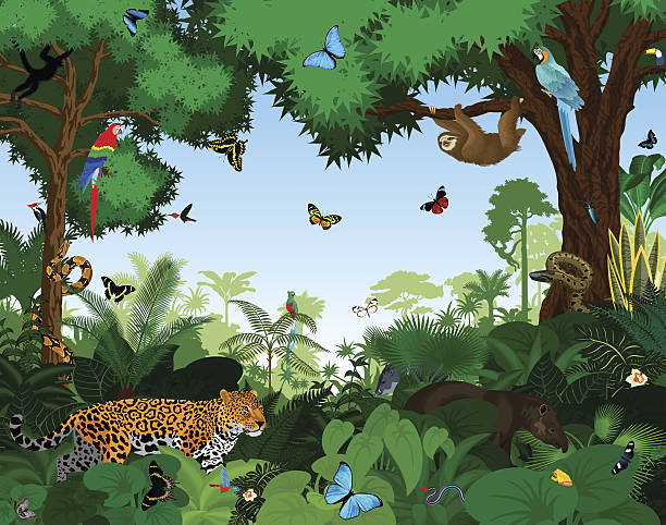 Amazon Rainforest Clipart.