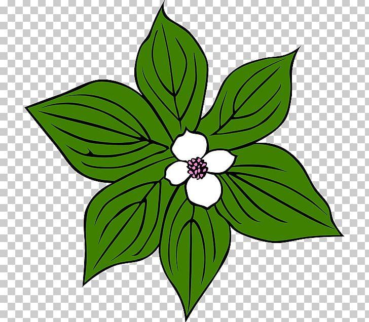 Jungle Tropical Rainforest Plant PNG, Clipart, Artwork.
