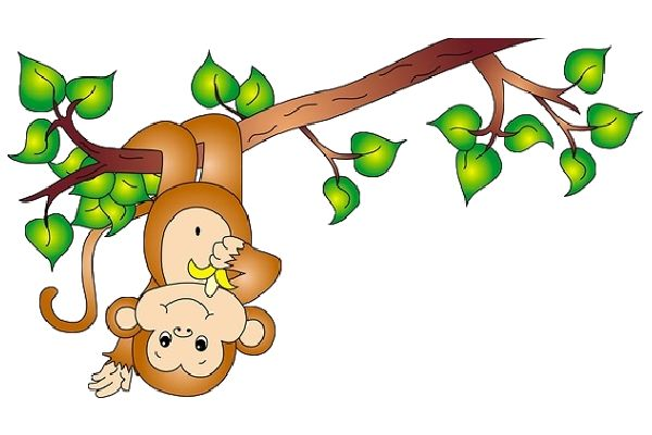 Rainforest monkey clipart.