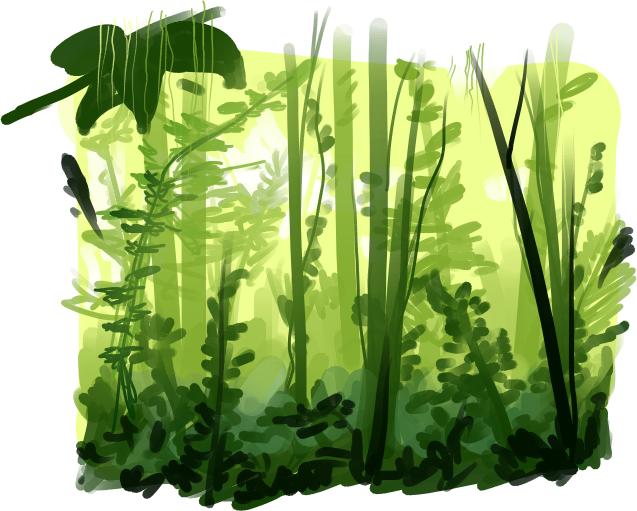 Rainforest PNG Transparent Images, Pictures, Photos.