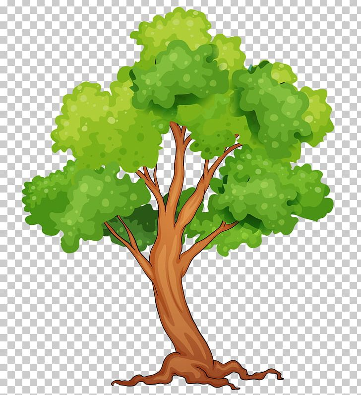 Tropical Rainforest Tree PNG, Clipart, Branch, Can Stock.