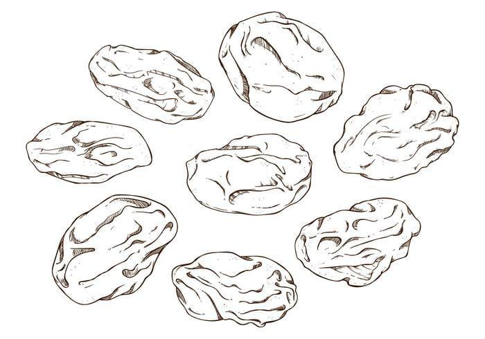 Hand Drawing Raisins Vector ai file.