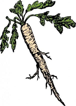 Clipart e gráficos vetoriais de Raiz de plantas alimentares.
