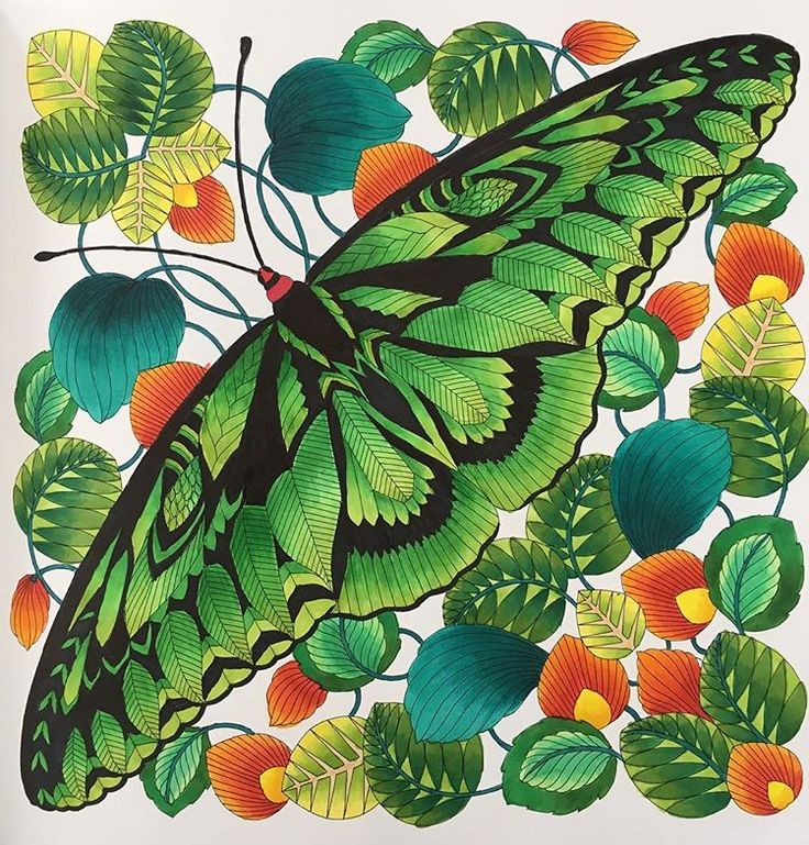 Rajah Brooke's Butterfly from Millie Marotta's Curious Creatures.