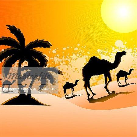 Silhouette of camels walking in a desert landscape, Rajasthan.