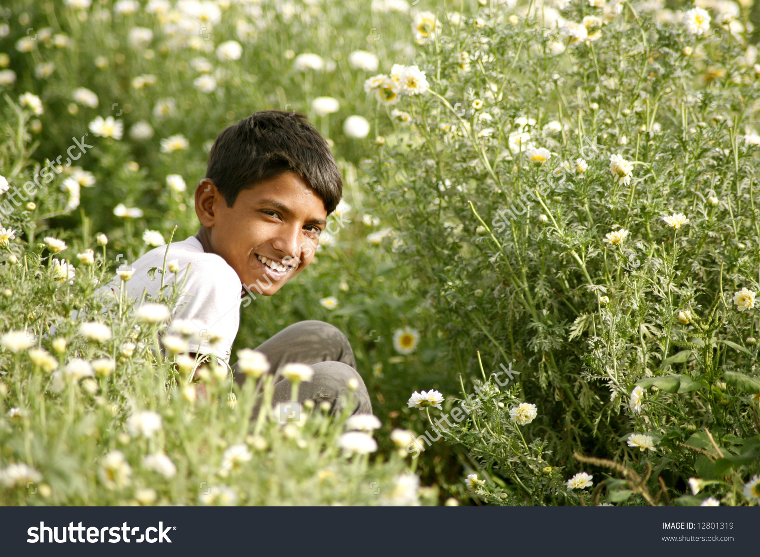 Young Rajasthani Boy Plucking Flowers Daisy Stock Photo 12801319.