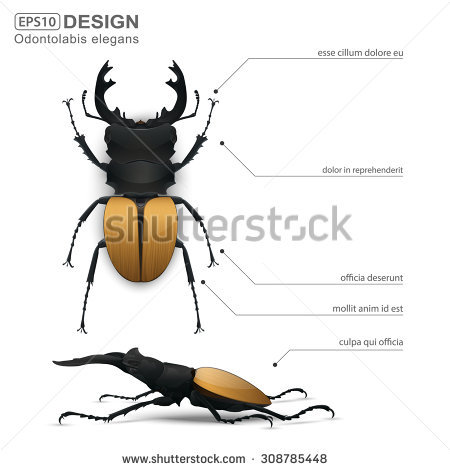 Elegan Stock Vectors & Vector Clip Art.