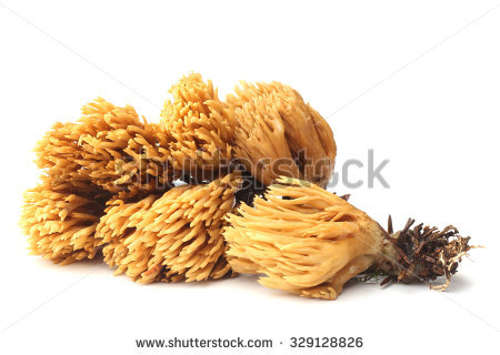 "ramaria Flava Changle"" Stock Photos, Royalty."