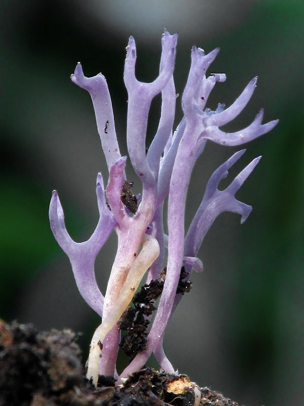 1000+ images about There's a fungus among us on Pinterest.