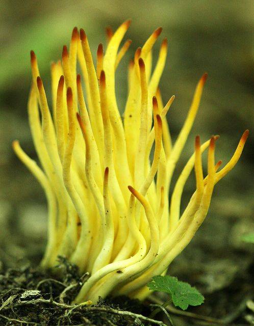 1000+ images about Up Close Mycology on Pinterest.