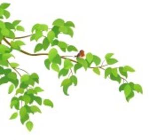 Ilustracion Vectorial De Una Rama De Arbol Verde Con Un.