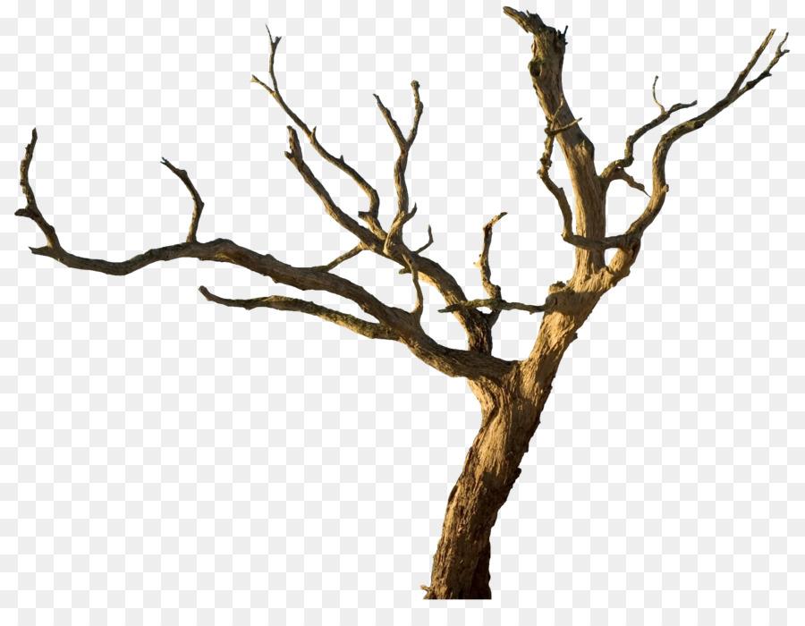 Enganchar, Rama, árbol imagen png.