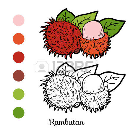 426 Rambutan Cliparts, Stock Vector And Royalty Free Rambutan.