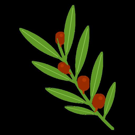 Ícone ramo de oliveira.