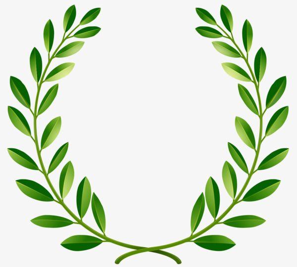 O Verde Da Paz De Oliveira, Em Nome Da Paz., Um Ramo De.
