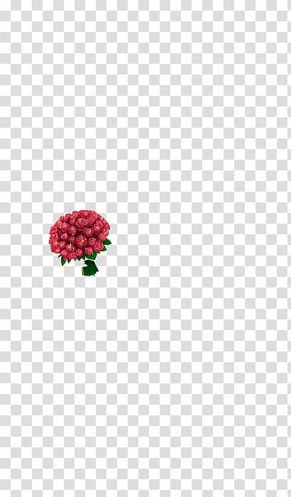 De Rosa transparent background PNG cliparts free download.