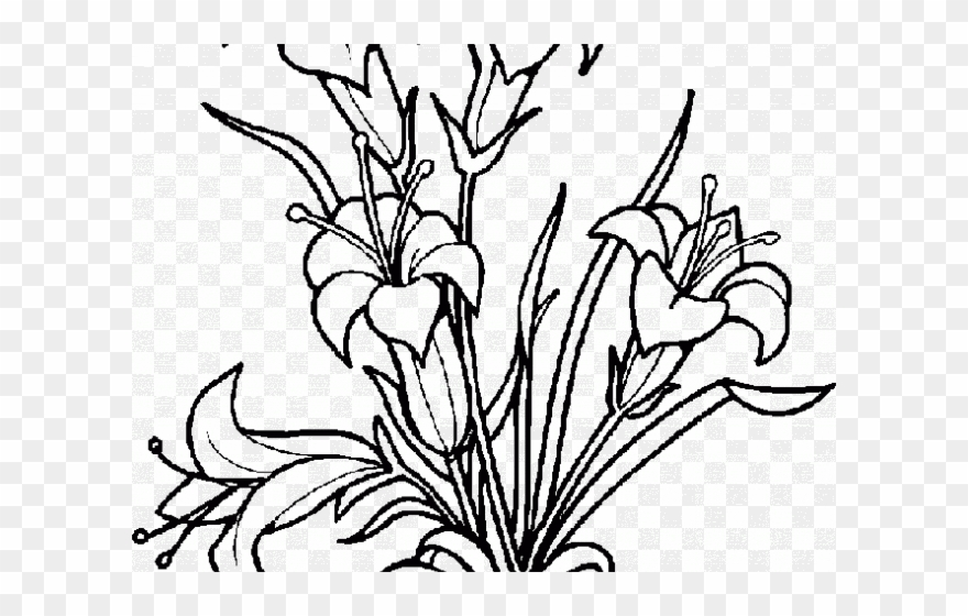 White Flower Clipart Coloring.