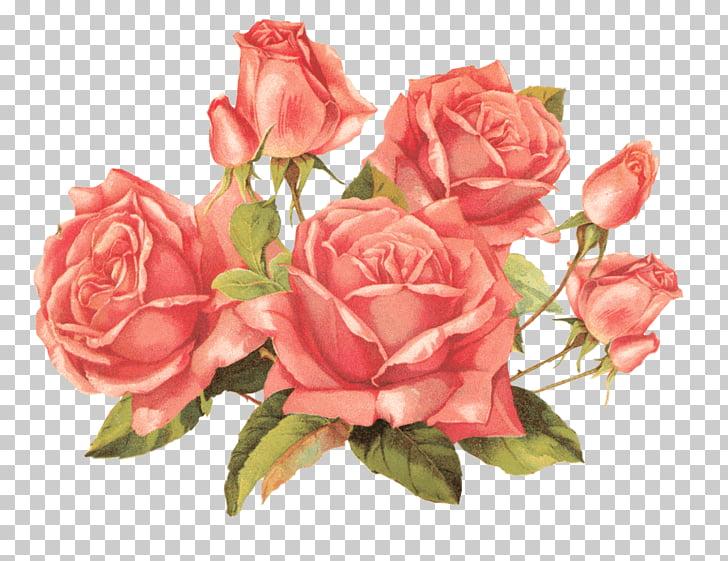 Rosa roja ilustración, ramo de rosas vintage PNG Clipart.
