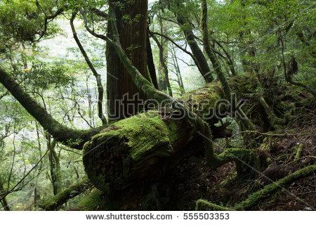 Forest Floor Vegetation Tree Roots Moss Stock Photo 133470149.