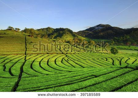 Indonesian Farmer Stock Photos, Royalty.