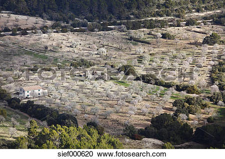 Stock Photography of Spain, Balearic Islands, Majorca, View of.