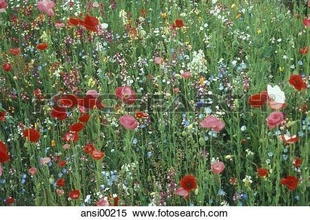 Stock Image of grass, plant, plants, flowers, rank growth, sprawl.