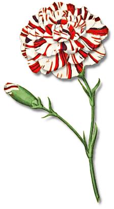 Rank plant clipart #4