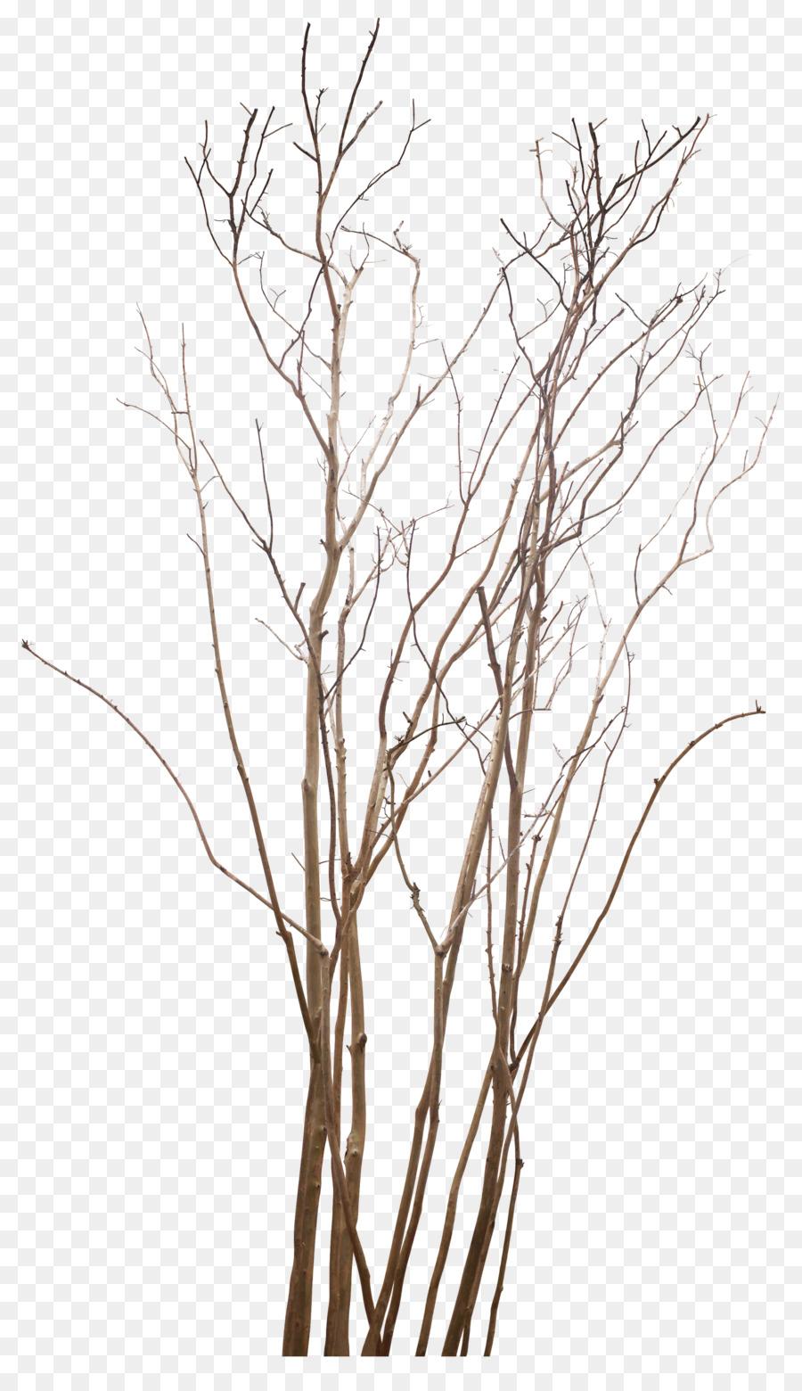 Ranting, Pohon, Gambar gambar png.