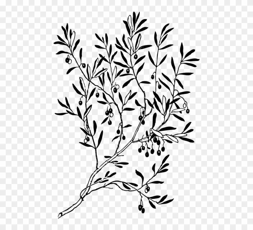 Dogwood Tree Drawing 4, Buy Clip Art.