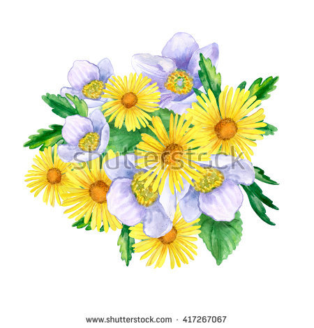 Wild Windflower Stock Photos, Images, & Pictures.