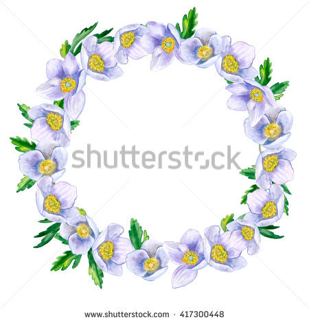 Ranunculaceae Stock Photos, Royalty.