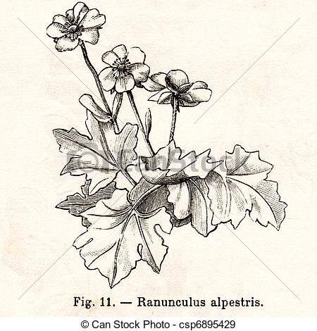 Stock Illustration of Vintage flowers illustrations.