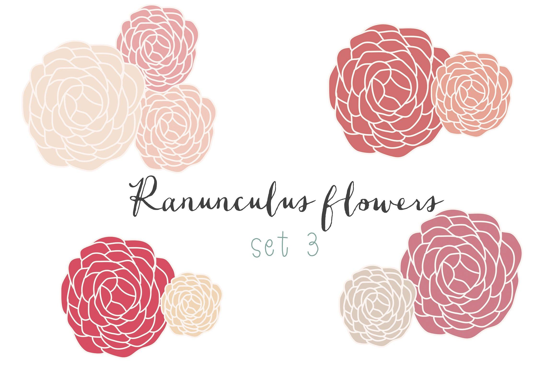 Ranunculus hand drawn clip art set 2 ~ Illustrations on Creative.