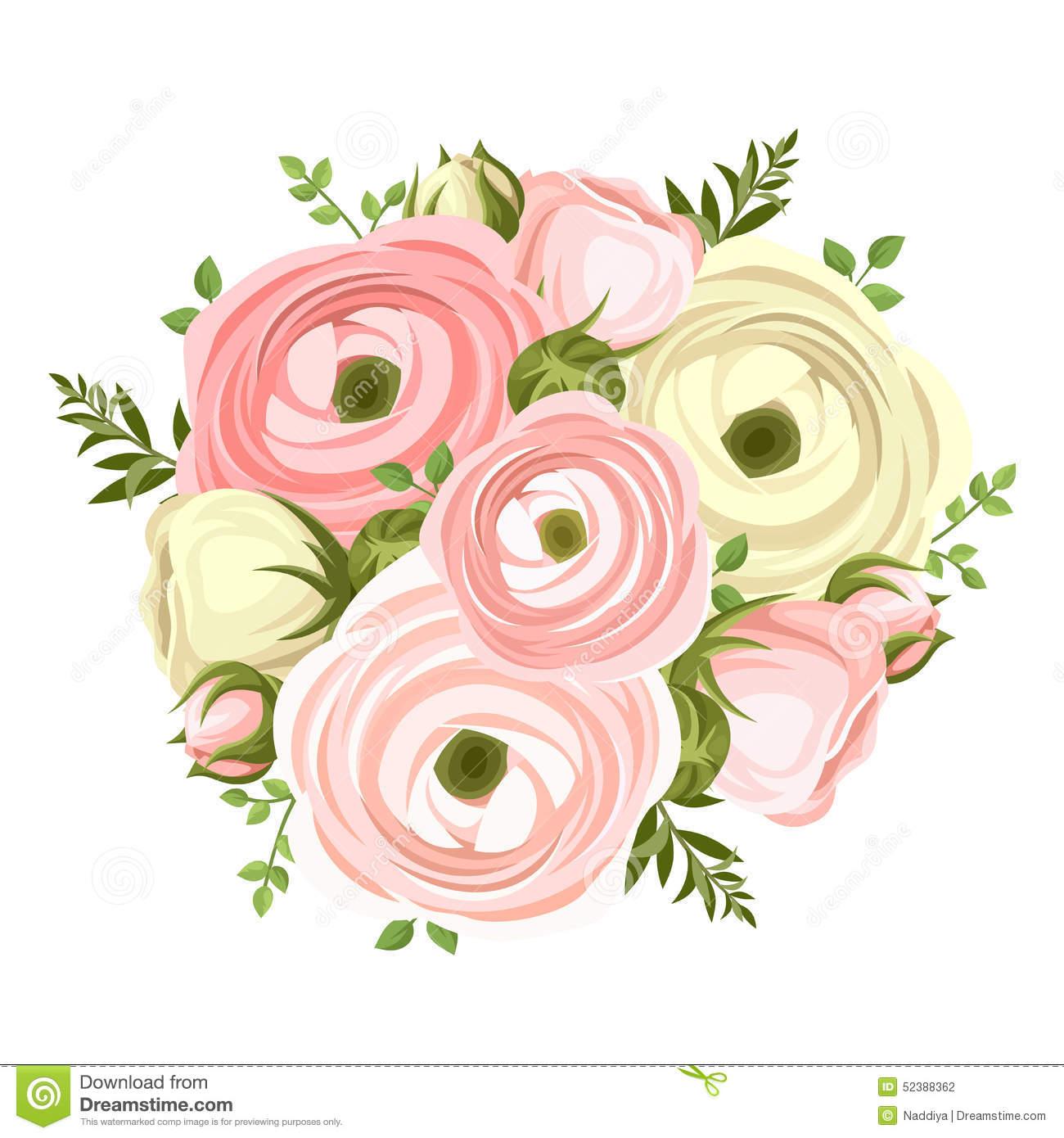 Ranunculus Stock Illustrations.