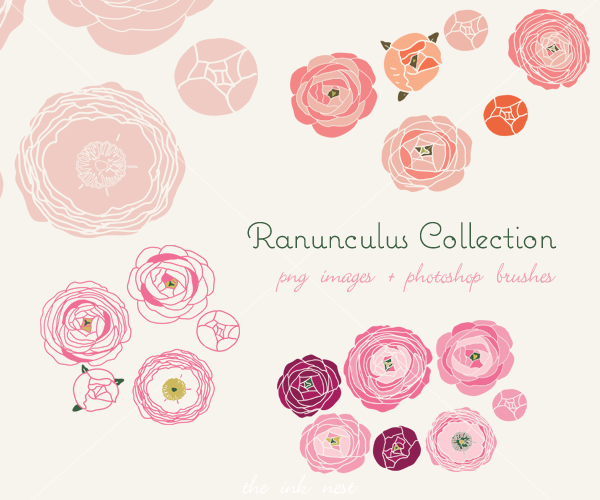 Ranunculus Collection.