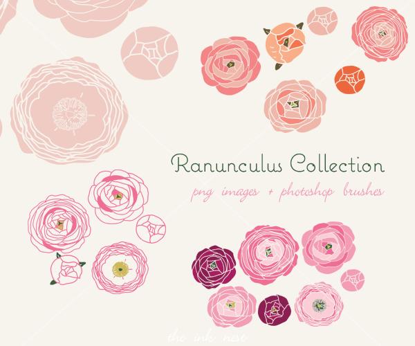 Ranunculus Collection.