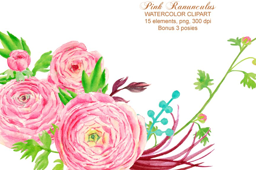 Ranunculus clipart Photos, Graphics, Fonts, Themes, Templates.