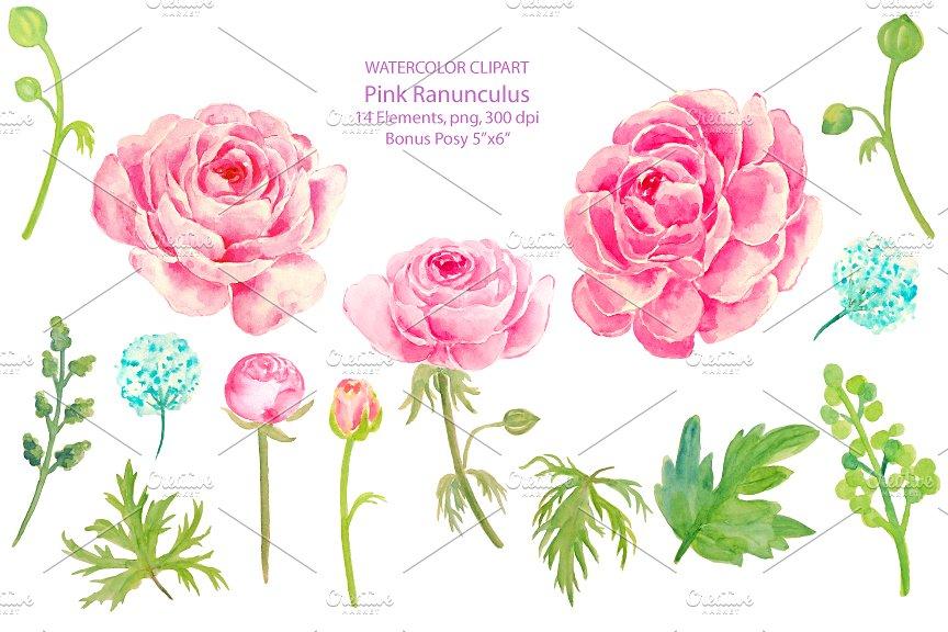 Wedding Clipart Pink Ranunculus ~ Illustrations on Creative Market.