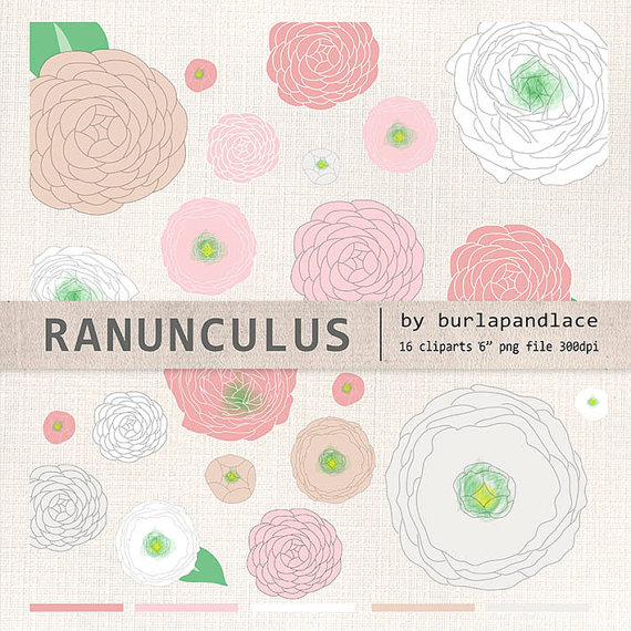 Hand draw clipart flower cliparts ranunculus by 1burlapandlace.