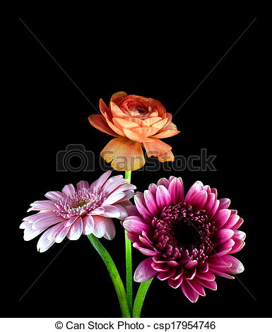 Stock Photo of gerbera with ranunkel.