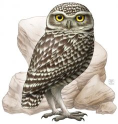 Burrowing owl clipart.