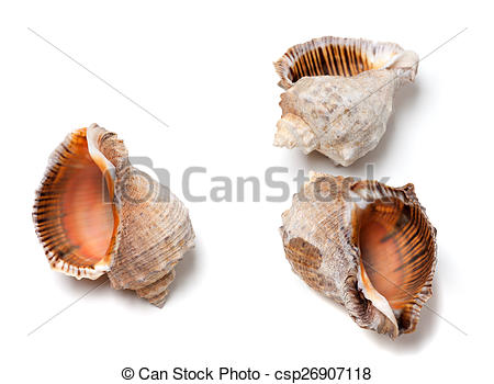 Stock Photography of Three empty shells from rapana venosa.